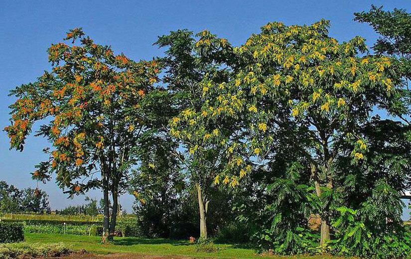 arbred'ornement et les arbres fruitiers